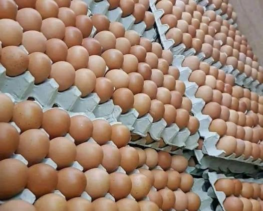 BUY FRESH JUMBO SIZE EGGS AT A DISCOUNT PRICE. CONTACT: 07034210182