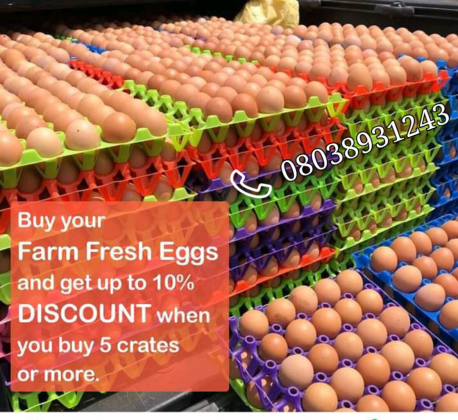 Poultry Eggs and Birds for sale at an affordable price rate with discounts